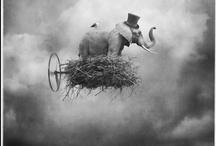 Photoshop Tutorials  / PS Tips and Ideas / by Portia Kolpin