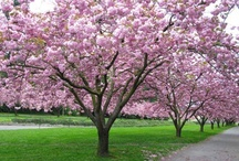 asheville garden ideas