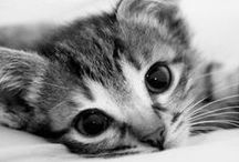 So Cute∞