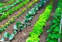 Gardening / Are you ready to grow a garden?  Here are some tips for use this spring!  Gardening is a great way to save money and eat healthier!