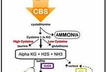 CBS gene