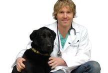 Veterinary Advise-Pet Wellness