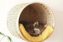 Clever Cat Stuff!!