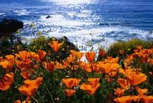 Places I've Called Home / Skaneateles, NY; Carmel, CA; Monterey, CA; Albany, NY; Boston, MA; Los Angeles, CA; Saratoga Springs, NY