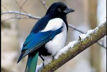 One for Sorrow / Enticed by telepathy. Enslaved by lust. https://www.amazon.com/One-Sorrow-Cunning-Prophet-Book-ebook/dp/B017EHJ5W0/ http://www.janegodmanauthor.com/