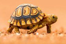 Turtle / by Studio Mick