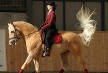 Horses / by Studio Mick