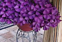 For Your Indoor Garden