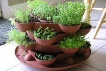 Gardens / I'm start a garden on my balcony and indoors. I'm also a black thumb.....much research is needed / by Dominique Wilson