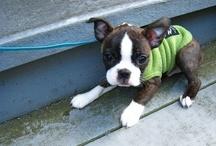 My little cute DOG