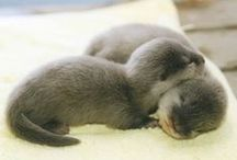 A N I M A L S | Cute & cuddley / a collection of cut animal pictures