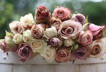 Beautiful Flowers & Foliage / by Amanda Burns
