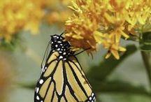 Attract Butterflies & Hummingbirds to Your Garden!