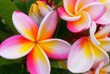 Tropical Beauties