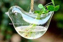 Plants / Garden / by Sonya
