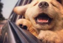 Cuteness / Because animals bring joy to my heart.