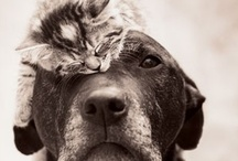 Pets / by Casey Bickers