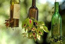 Plants / Garden / Gardening Tips, Plant care etc