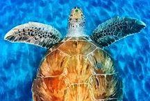 Hawaiʻi Underwater / by Sherron Bull