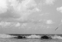 surf, bro