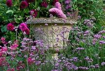 Gardens, Plants & Flowers / by Peony