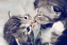 Cute baby animals - Animalitos / * Thanks for following me, don't forget to check all my other boards, and enjoy! * / by Marina Castilla