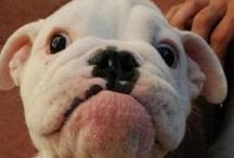 Pupper Cuteness! / The cutest puppies and dogs we've seen online! / by MCAS Pets