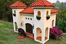 In The Dog House! / by MCAS Pets