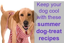 Cooking for Canines / by MCAS Pets