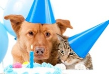 Parties FOR Your Pet / by MCAS Pets
