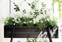 PLANTS / Plants and Gardening Stuff