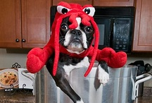 Critters In Costume / Adorable dressed up dogs and cats plus tons of DIY pet costume ideas and Halloween tips! / by MCAS Pets