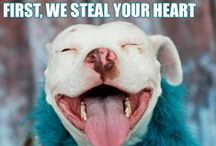 ADOPTED MCAS Funnies! / by MCAS Pets