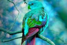"""POLLY PARROTS... / Have a great love for these birds...Had one as a child , a Green Cheek Amazon...named Polly...she was a great talker, would follow me every where .""""Pop play"""" she would say...hated men would attack their trousers..."""