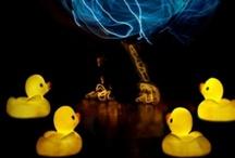 DAFFYS... / Sweet little daffy ducklings...