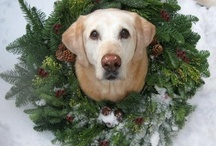 Christmas with Critters / Fun and festive holiday ideas for your furry dog and cat family members! / by MCAS Pets