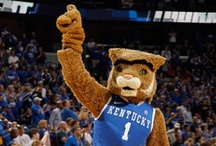 Kentucky Wildcats... / by Sharon Barton ツ