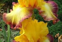 Orchids and flowers I love / by Janet Goerdt