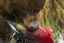 Fishing Fun / Smashing pics of fishing and outdoors fun...