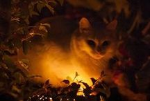 PURRFECT PURRS... / Perfect purry pet photos...PY...