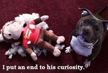 The NAUGHTY Files / The hilarious naughty things our cats and dogs do. So funny! / by MCAS Pets