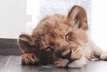 The Cutest Animals / by KiwiLii .