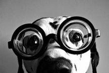 Dogs / by Angela Krube