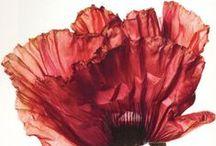 Flowers. / by Angela Krube