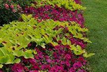 gardening / by Julie Johnson