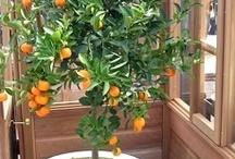 yard/kitchen garden--edibles / by MS Bradshaw