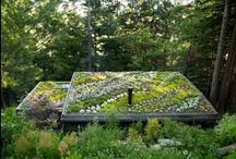 I want to be Green / Environmental stuff / by Lynn McDonald
