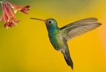 Hummingbird / by Rosa María Pereira Salazar