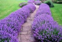 Gardening / by Lynda Donnelly-Crites