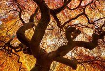 Trees / by Natalie Pray